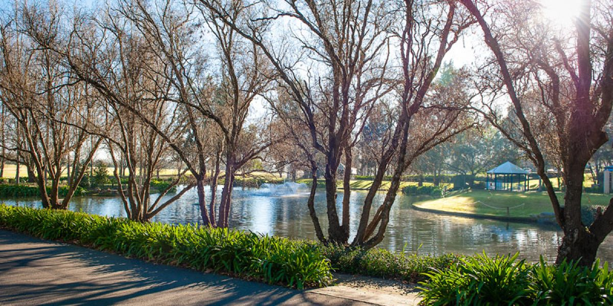 Lakeside tree view - Photo by Kim Harris of Ikon Photography